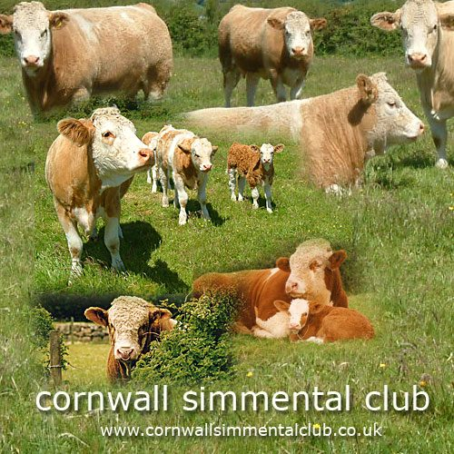 Cornwall Simmental Club